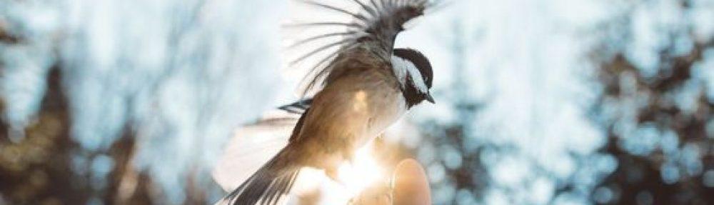 啟動Activate Healings
